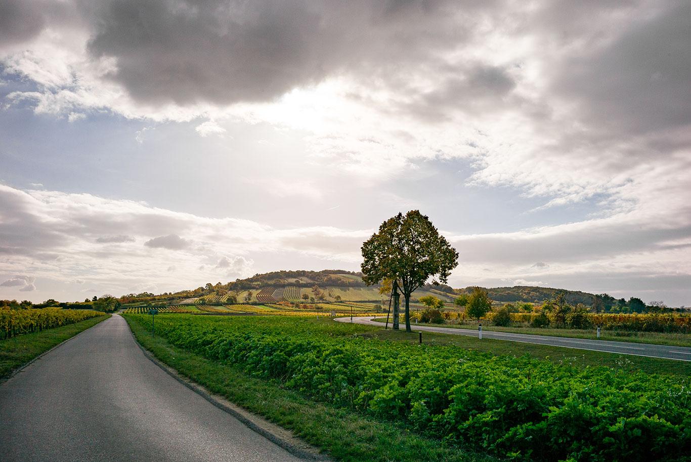 Straße im Burgenland mit blick auf Weingärten